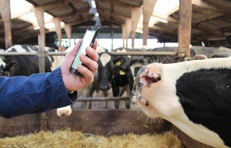 Boer met smartphone in koeienstal