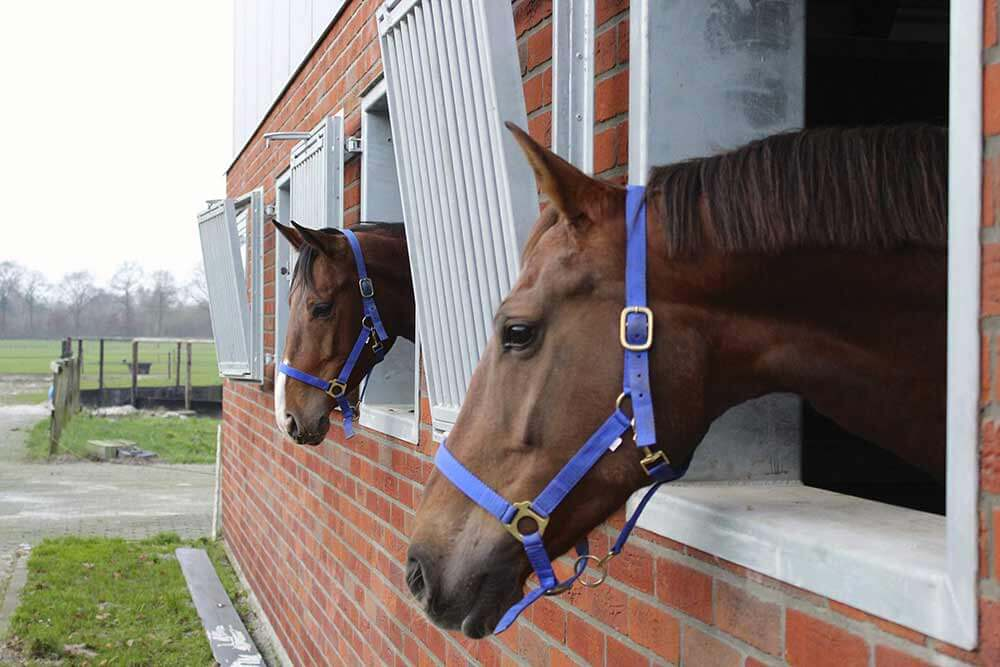 Paarden in stal