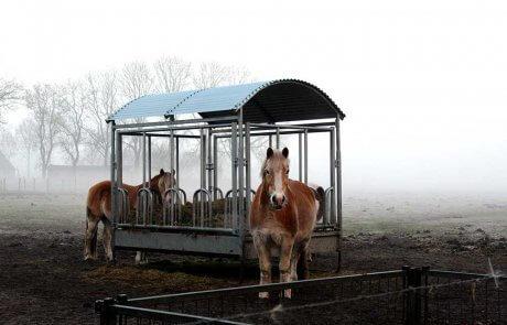 Twee paarden